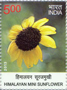 himalayanmsunflower030913